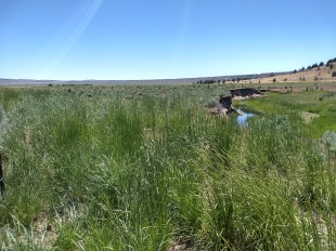 Big Summit Meadow